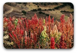 Colorful Quinoa